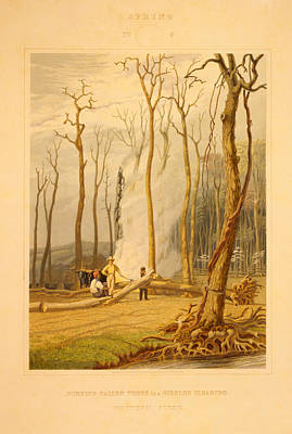 Spring--burning Fallen Trees In A Girdled Clearing--western Poster by Litz Collection