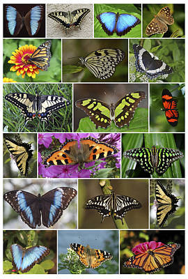 Spring Butterfly Panel Poster