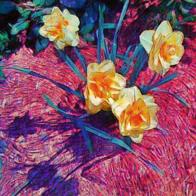 Spring Daffodils On Red - Square Poster
