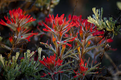 Spring Dew Paintbrush Poster