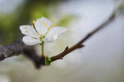 Spring Flower Art Poster by Vishwanath Bhat