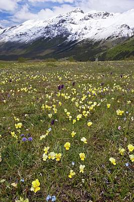 Spring Flowers By Monte Della Scindarella Poster