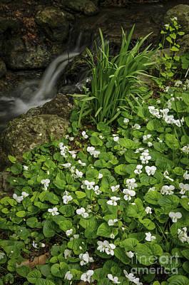 Spring Flowers Near Creek Poster