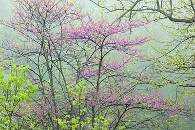 Spring Forest In Fog Poster
