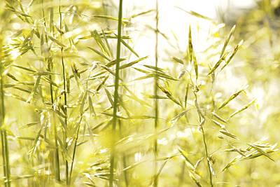 Spring Grasses Poster by Daniel Kasztelan