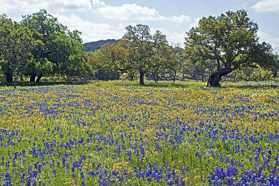 Spring In The Texas Hill Country Poster by Gary Holmes