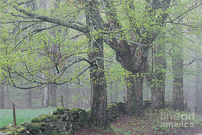 Poster featuring the photograph Spring Mist by Alan L Graham
