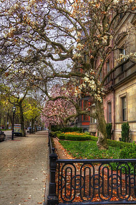Spring On Commonwealth Avenue - Boston Poster