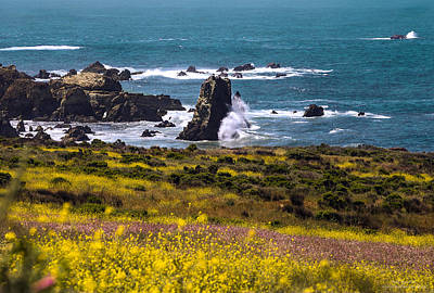 Spring On The California Coast By Denise Dube Poster