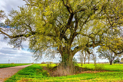 Spring On The Delta Poster by Steve Harrington