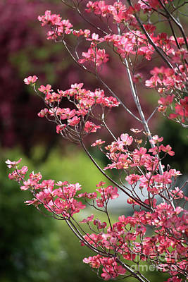 Spring Pink And Green Poster