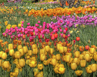Spring Sensations Poster