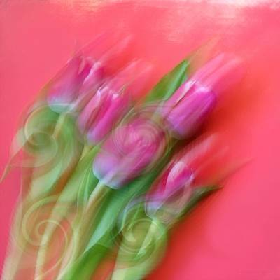 Spring Senses Poster by Chrystyne Novack