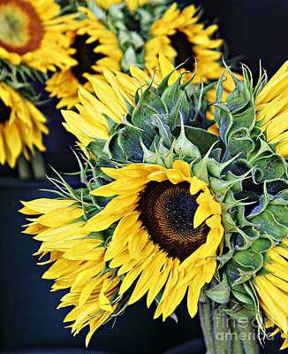 Spring Sunflowers Poster