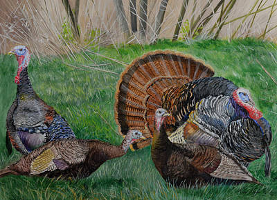 Spring Tom - Turkeys Poster by Alvin Hepler