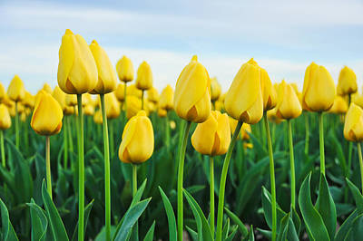 Poster featuring the photograph Spring Tulips by Crystal Hoeveler