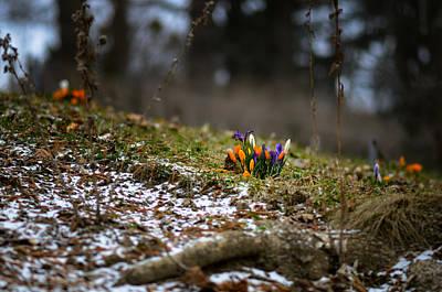 Spring Vs Winter Poster by Oleksandr Maistrenko