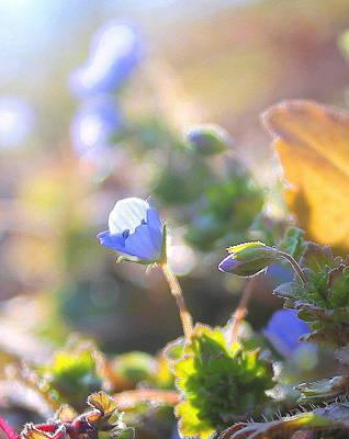 Spring Wildflowers Poster