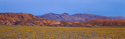 Spring Wildflowers, Death Valley Poster