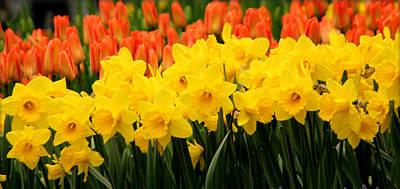 Springtime In Amsterdam Poster