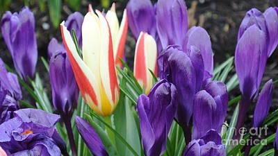 Springtime Poster