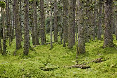 Spruce Forest & Moss Near Coast Kodiak Poster