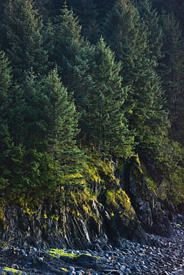 Spruce Tree Forest, Chiniak Bay, Kodiak Poster