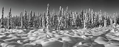 Spruce Trees On A Snow Covered Poster