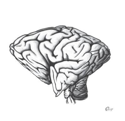 Square Brain In A Round Skull Poster