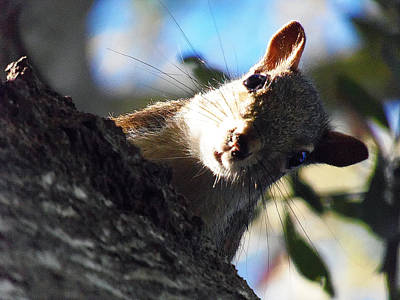Poster featuring the photograph Squirrel 003 by Chris Mercer