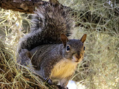Squirrel 3 Poster