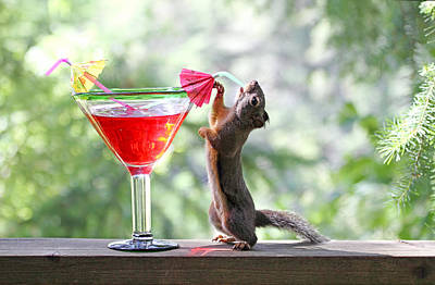 Squirrel At Cocktail Hour Poster