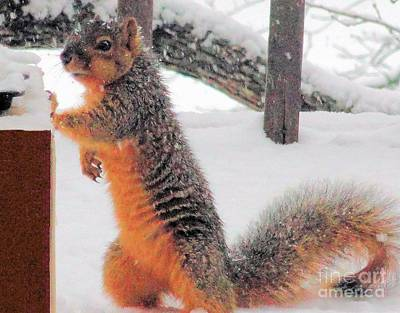 Poster featuring the photograph Squirrel Checking Out Seeds by Janette Boyd