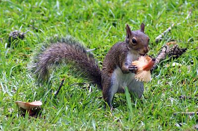 Squirrel Eats Mushroom Poster by Kim Pate