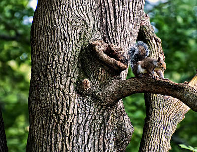 Squirrel Guarding Watering Knot Poster