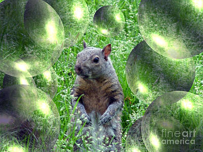 Squirrel In Bubbles Poster