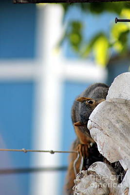 Squirrel In Hiding Poster