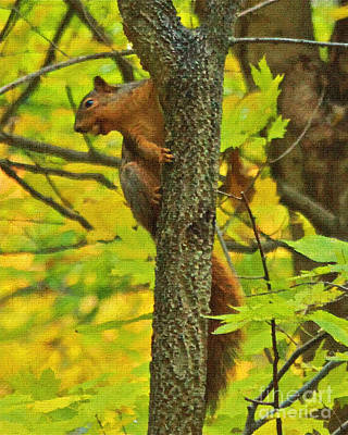 Squirrel In The Woods 2 Oil Poster