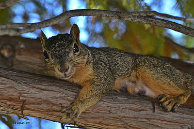 Squirrel On Watch Poster
