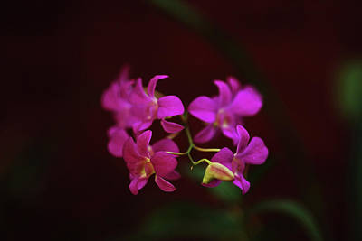 Sri-lanka, Kandy, Peradeniya Botanical Poster by Stephanie Rabemiafara