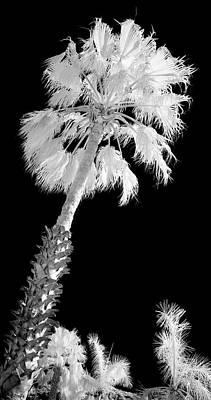 St. Maarten Tropical Palm Poster by Luke Moore