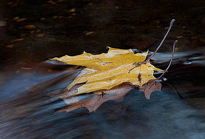 Stacked Autumn Leaves On Water Poster