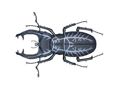 Stag Beetle Respiratory System Poster by Mikkel Juul Jensen