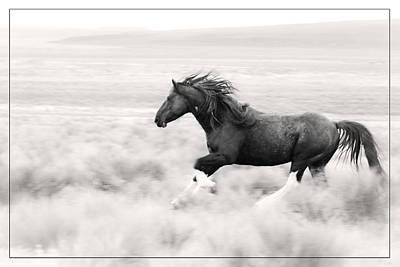 Stallion Blur Poster