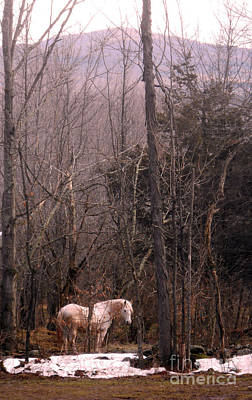 Stallion In The Mountain Pasture Poster by Patricia Keller