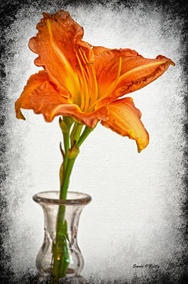 Stand Out Lily Poster by Sandi OReilly