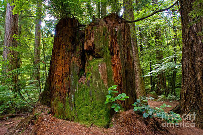Stanley Park Trees 12 Poster by Terry Elniski