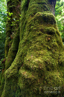 Stanley Park Trees 17 Poster by Terry Elniski