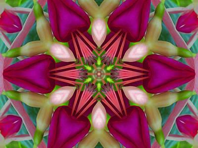 Star Fuchsia 2 Mandala Poster