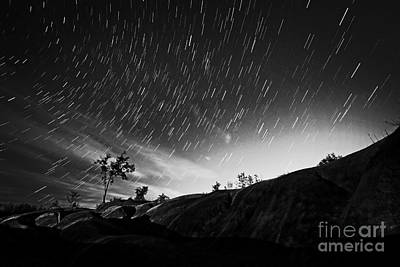 Star Trails And Trees Mono Poster